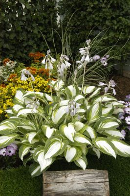 Hosta Enterprise - Hosta